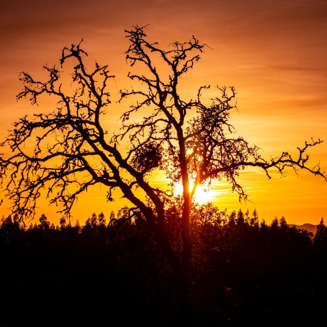 """A Corking Sunset"" stock image"