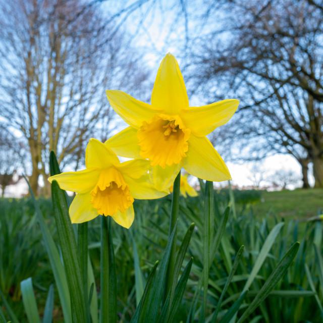 """Flowers, Ward Park, Bangor, Northern Ireland"" stock image"
