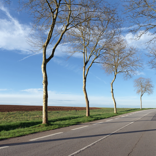 """""""Tree lined road"""" stock image"""