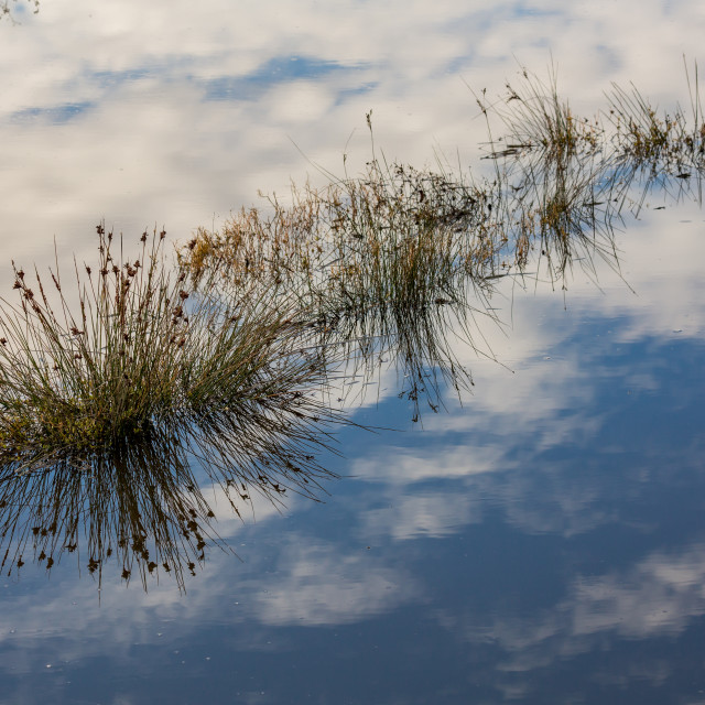 """""""Lovely water sky reflection and blooming bushes"""" stock image"""