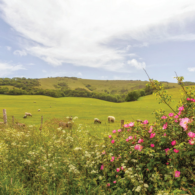 """""""The rolling south downs"""" stock image"""