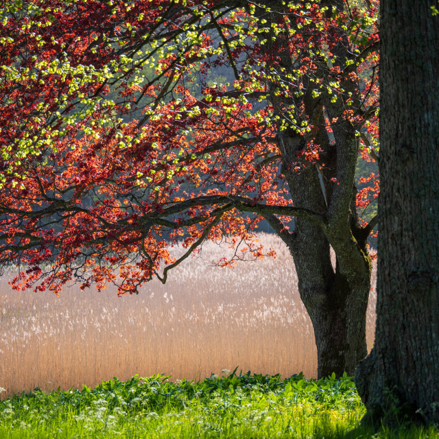 """""""Spring colours"""" stock image"""
