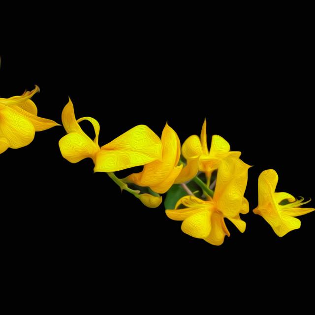 """Yellow Broom"" stock image"