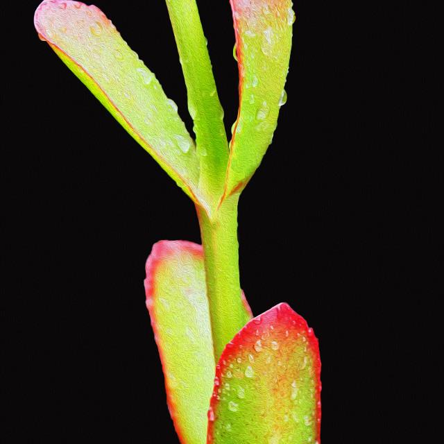 """Succulent"" stock image"