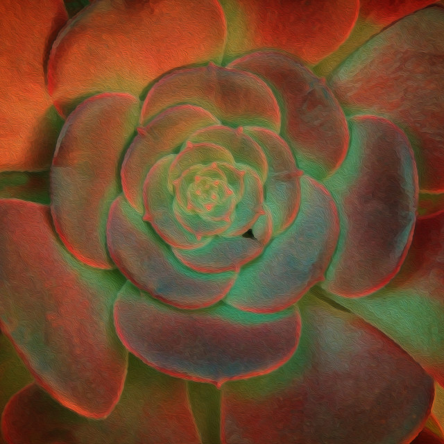 """""""Aeonium succulent"""" stock image"""