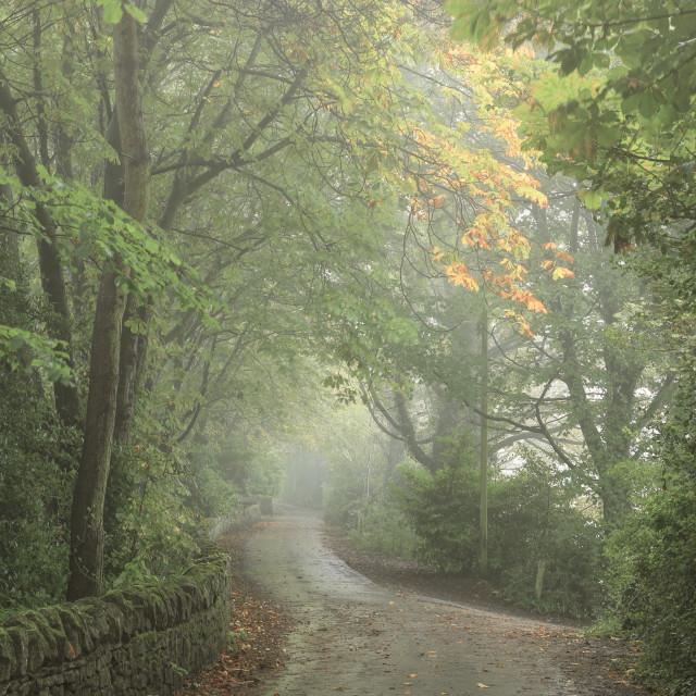 """Autumnal Dronfield Walk"" stock image"