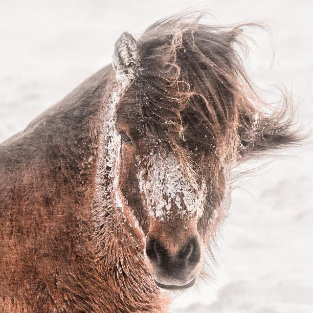 """horse portrait"" stock image"