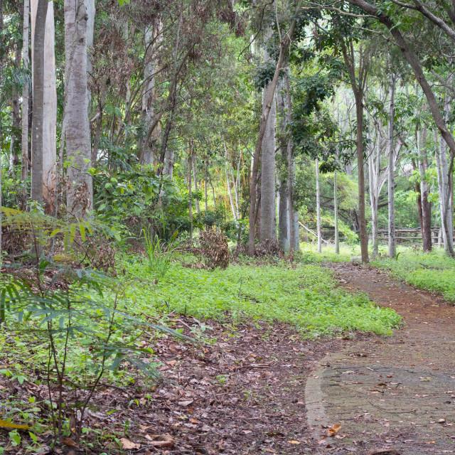 """""""Basalt Gully Rainforest"""" stock image"""