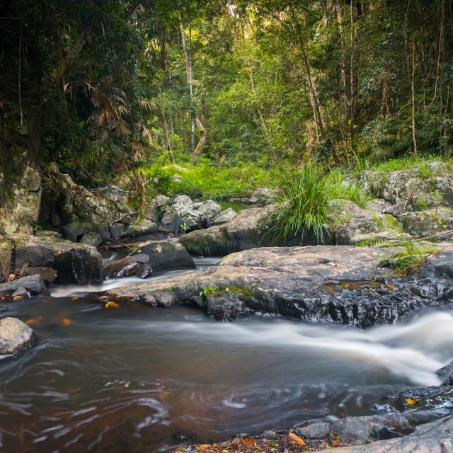 """Jumrum Creek, Kuranda, in Lush Tropical Rainforest"" stock image"