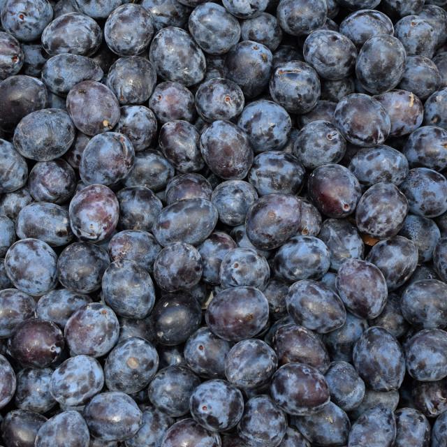"""""""prunes fruit background"""" stock image"""