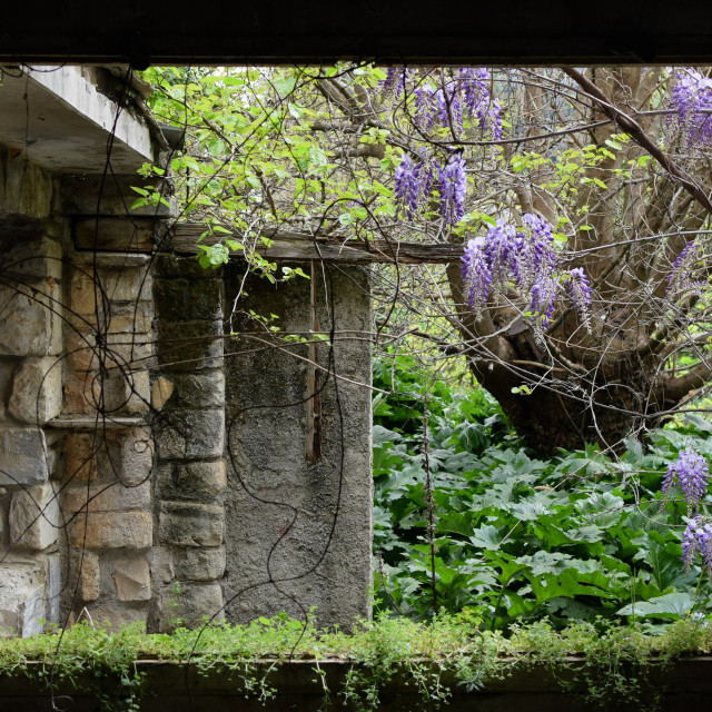 """""""silence in the secret garden"""" stock image"""