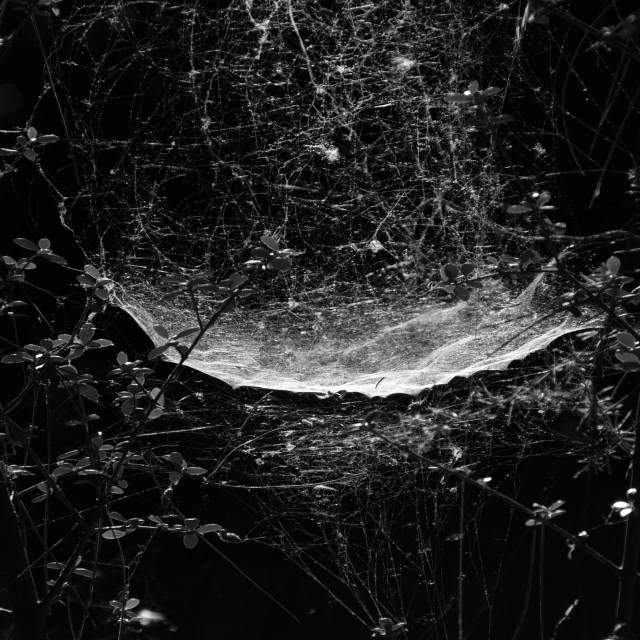 """""""spider web dark forest"""" stock image"""