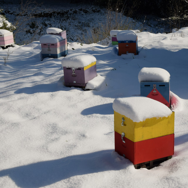"""""""wooden beehives covered in snow"""" stock image"""
