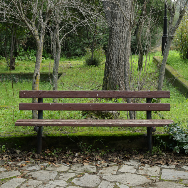 """""""wooden bench in park"""" stock image"""