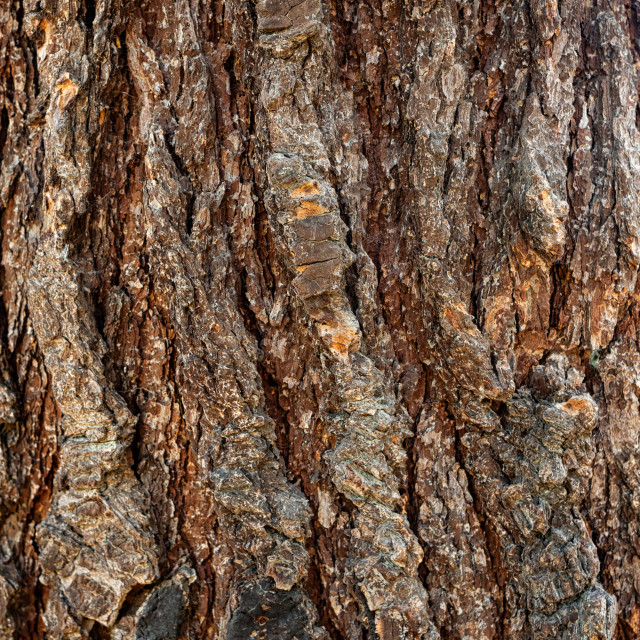 """Background of the bark of a wrinkled and old tree. The pattern is natural and..."" stock image"