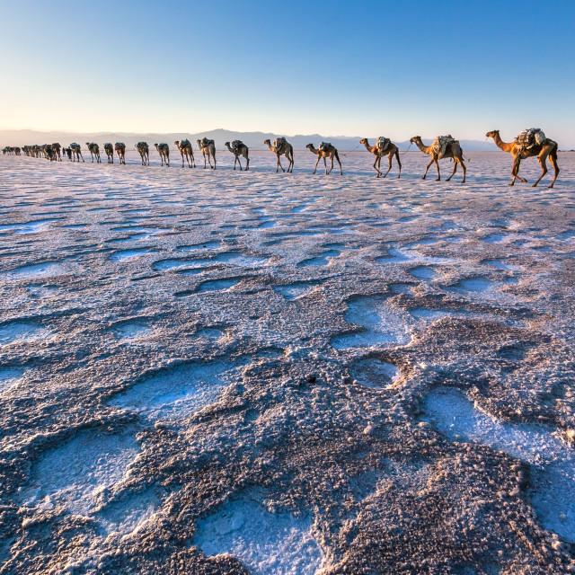 """Camel caravan Sunset in salt desert"" stock image"