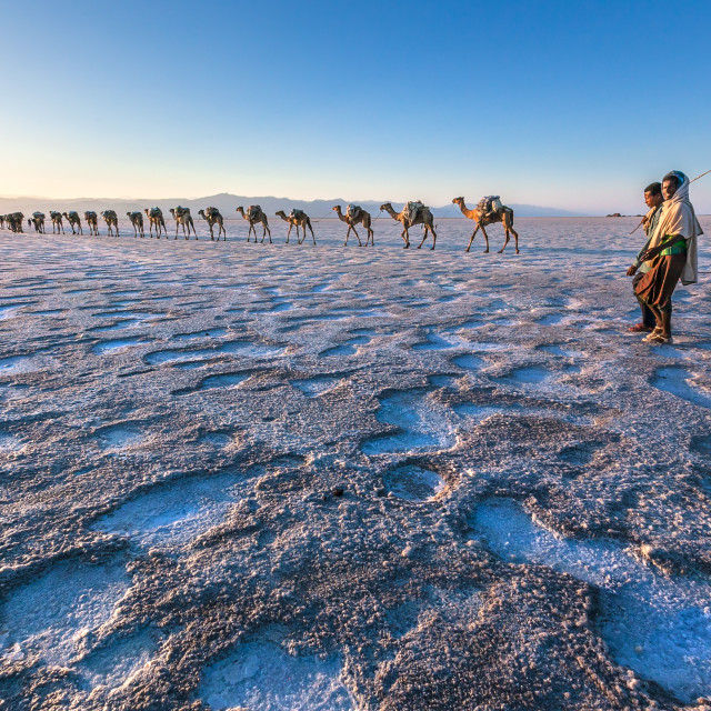 """camel caravan carrying salt and herders"" stock image"