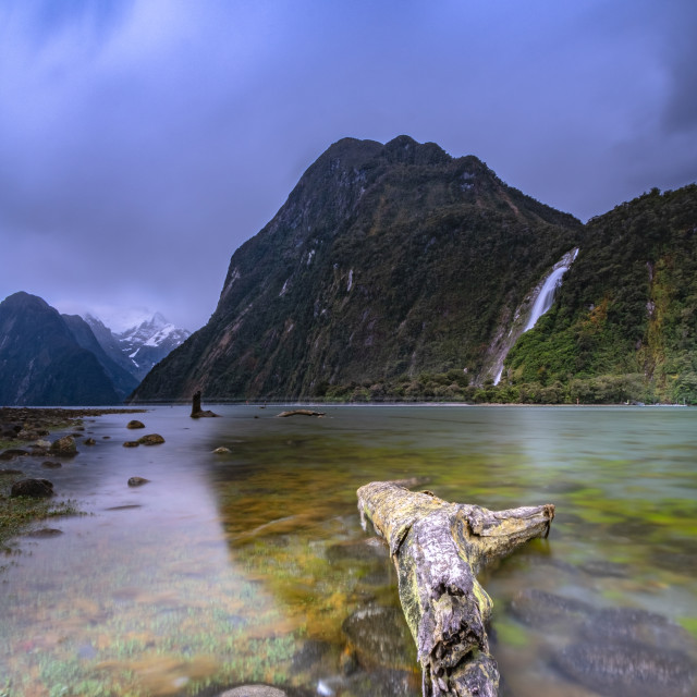 """Driftwood in Milford Sound"" stock image"