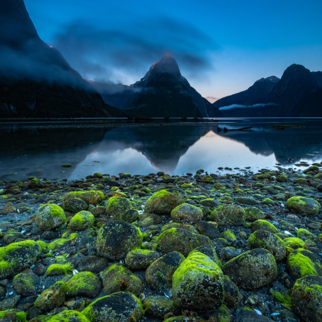"""Vibrant Green Moss Covered Pebbles in Milford Sound"" stock image"