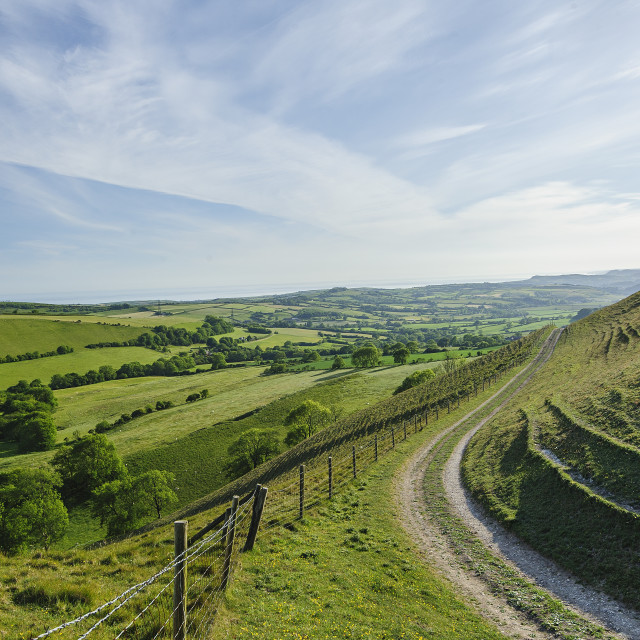 """Looking West From Eggardon, Dorset"" stock image"