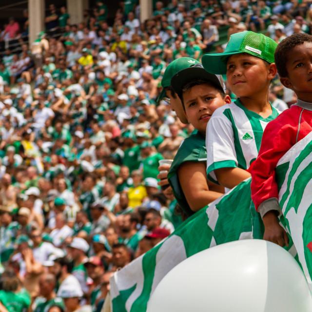 """""""Palmeiras football fans"""" stock image"""
