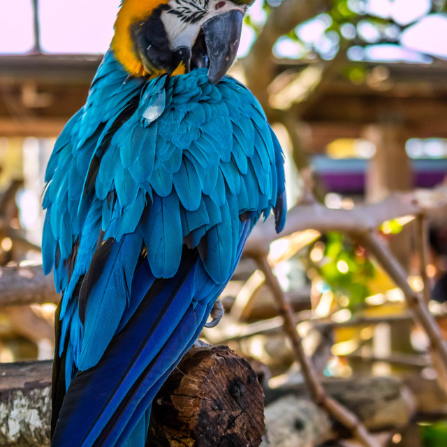 """""""A Colorful Blue Parrot in Orlando, Florida"""" stock image"""