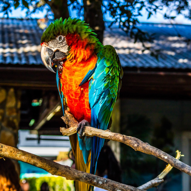 """""""A Green and Orange Macaw in Orlando, Florida"""" stock image"""