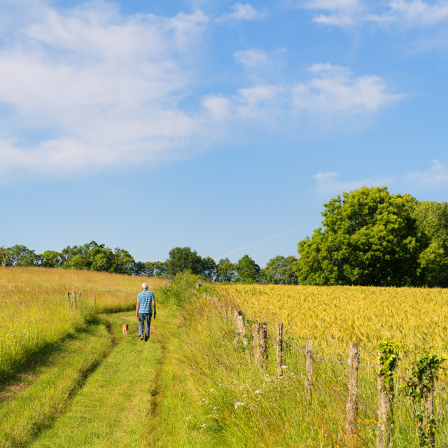 """Man walking the dog in French Limousin"" stock image"