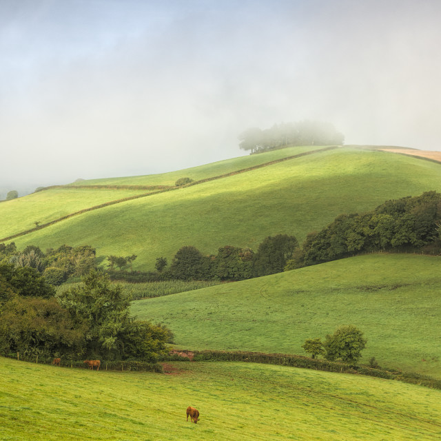 """Longcombe mists"" stock image"