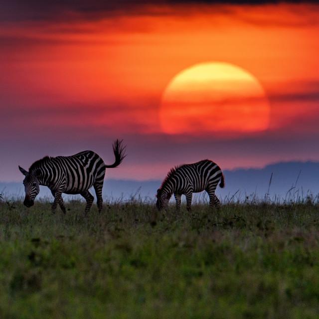 """""""Colorful Sunset at Masai Mara"""" stock image"""