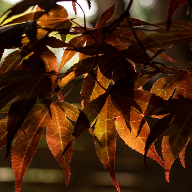 """""""My Nature - Acer"""" stock image"""