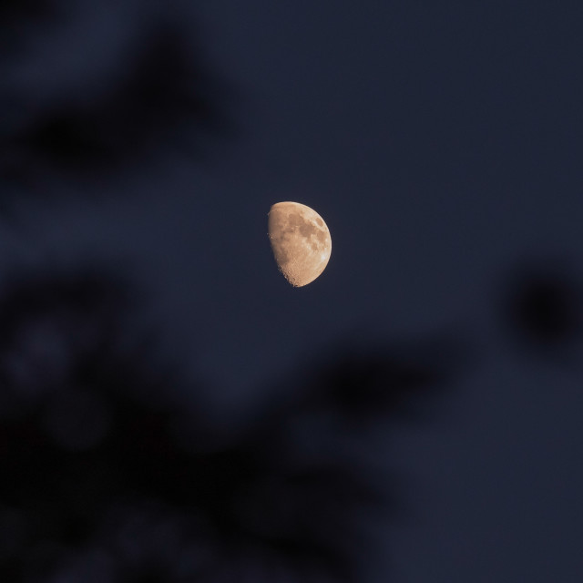 """""""My Nature - Super Pink Moon"""" stock image"""