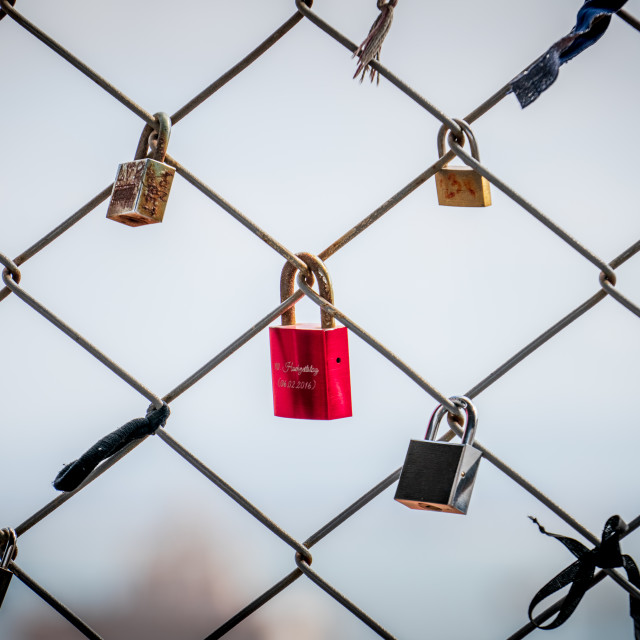 """Loney red Lovelock"" stock image"