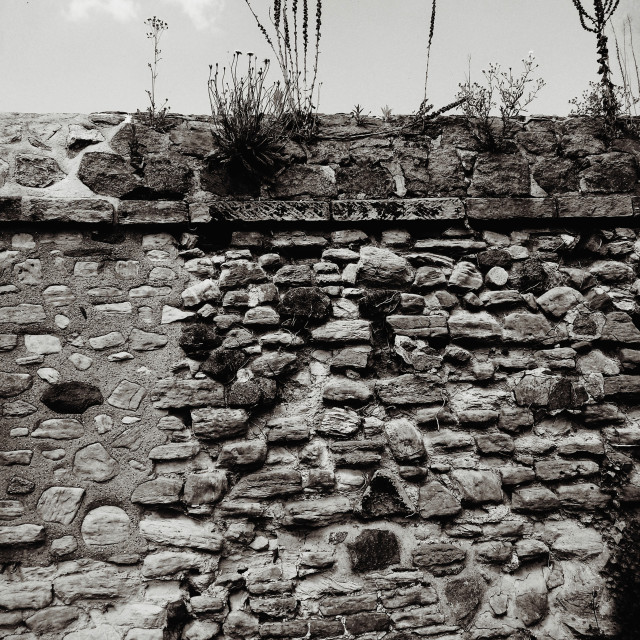 """""""Abbey Park Wall"""" stock image"""