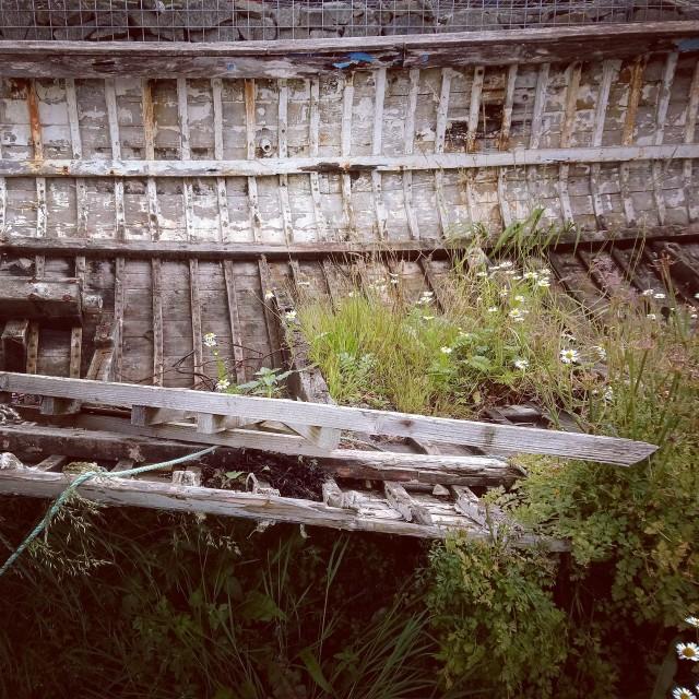 """""""Boat Skeleton"""" stock image"""