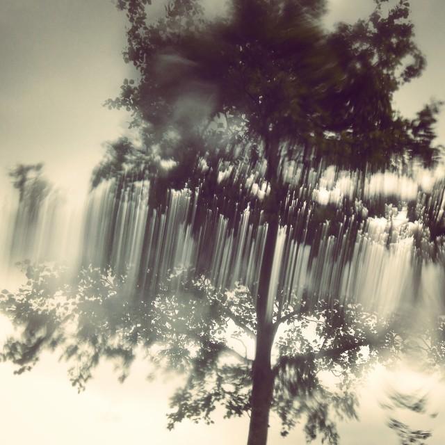 """Rain Tree at Watermead"" stock image"