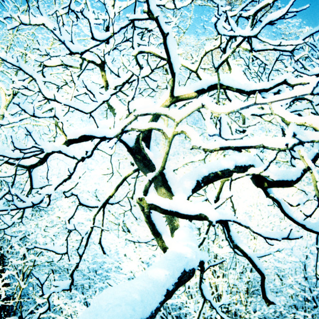 """Like Cracks in the Snow"" stock image"