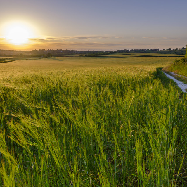 """Summer sunset over wheat field near Winchester, UK"" stock image"