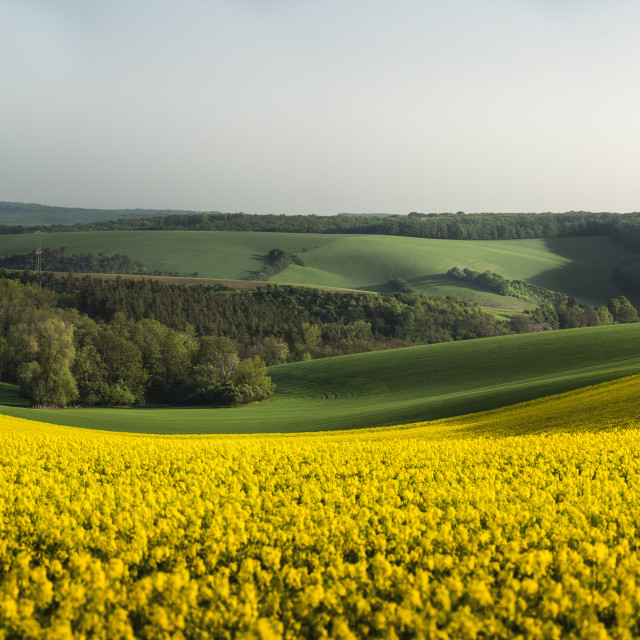 """""""South Moravian panorama with rapeseed fields, forests, and hills"""" stock image"""