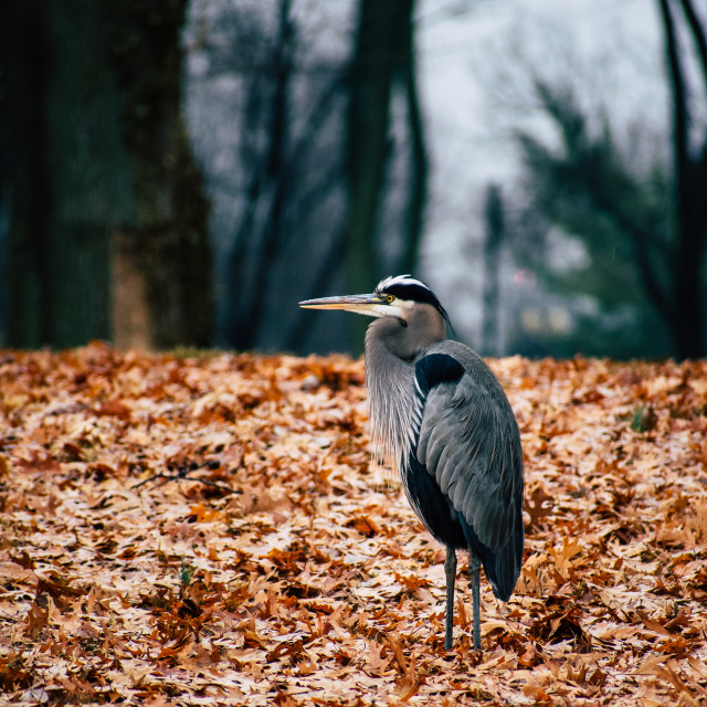 """""""Bird in the national mall"""" stock image"""