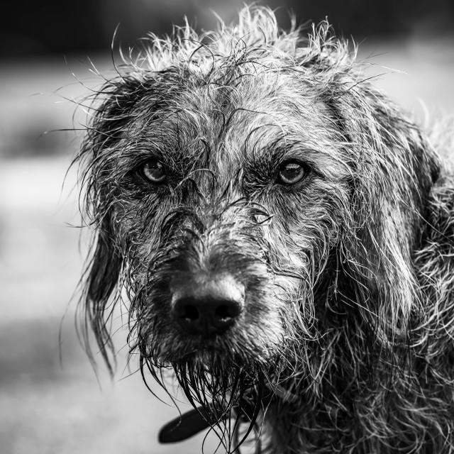 """Dog having a swim in the River Cam."" stock image"