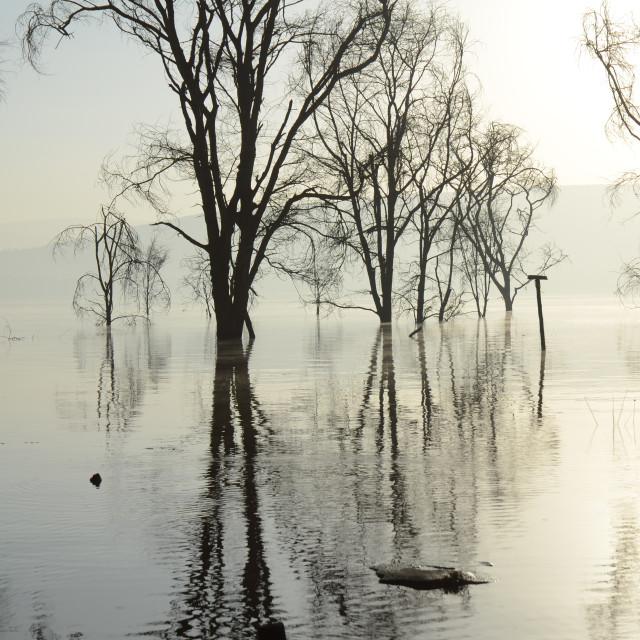 """""""Flooded Lake Nakuru, Kenya"""" stock image"""