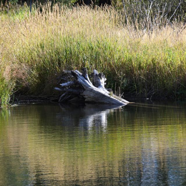 """""""Lake still life, Upper Blackfoot Valley"""" stock image"""