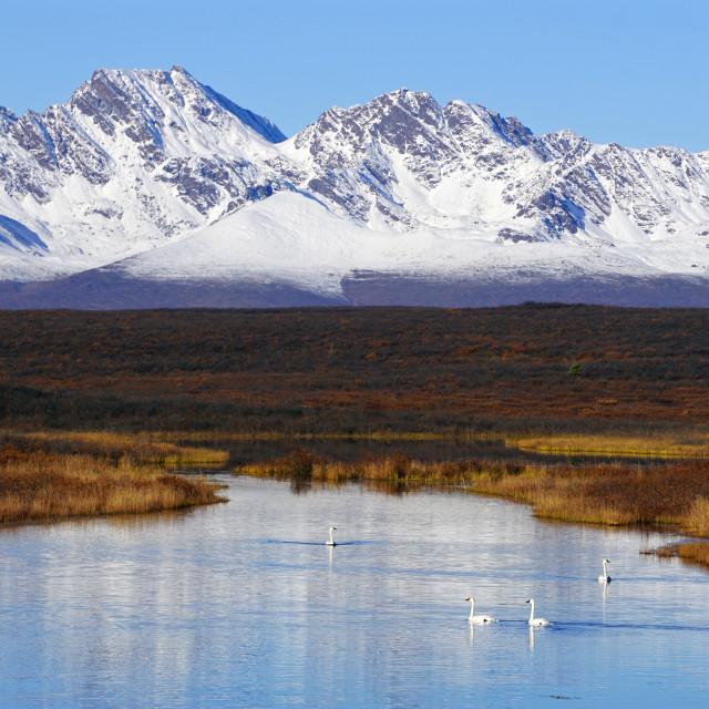 """""""Swan Mountain Lake"""" stock image"""