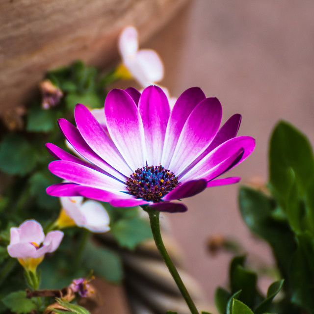 """Springflower"" stock image"