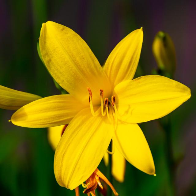 """Yellow dream"" stock image"