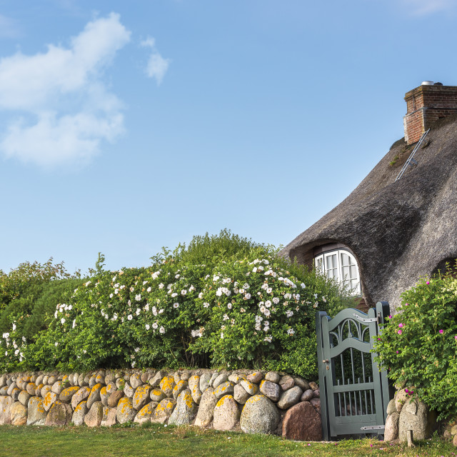 """""""Thatched roof friesian house with flower fence on Sylt island"""" stock image"""