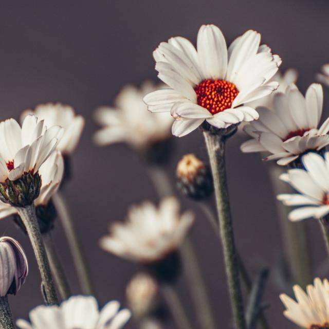"""I love flowers"" stock image"