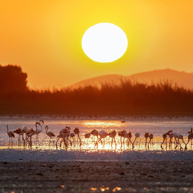 """""""Flamingo at sunset!!!"""" stock image"""