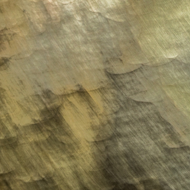 """Sycamore bark abstract #3"" stock image"